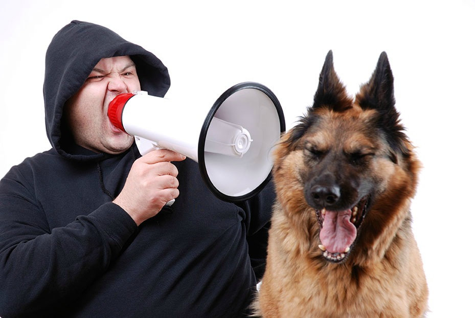 If you are going to do all the barking SalesFish b2b sales experience